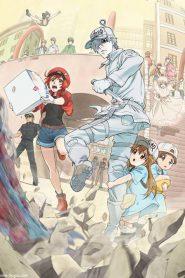 Hataraku Saibou ตอนที่ 1-14 ซับไทย + OVA