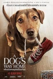 A Dog'S Way Home เพื่อนรักผจญภัยสี่ร้อยไมล์ 2019